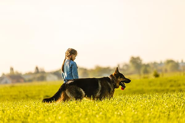 personal injury lawyer can help with dog bite cases